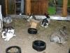 kaninchen-10