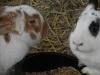 kaninchen-11