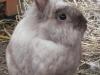 kaninchen-12