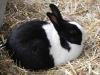 kaninchen-13