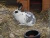 kaninchen-14