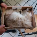 Schlafen im Karton-unbezahlbar