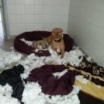Mein Kissen ist explodiert...