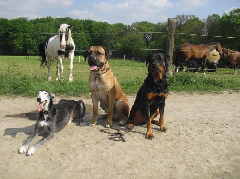 tierheim siebengebirge hunde