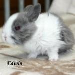 EdwinJPG