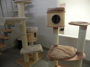 Katzenhaus01
