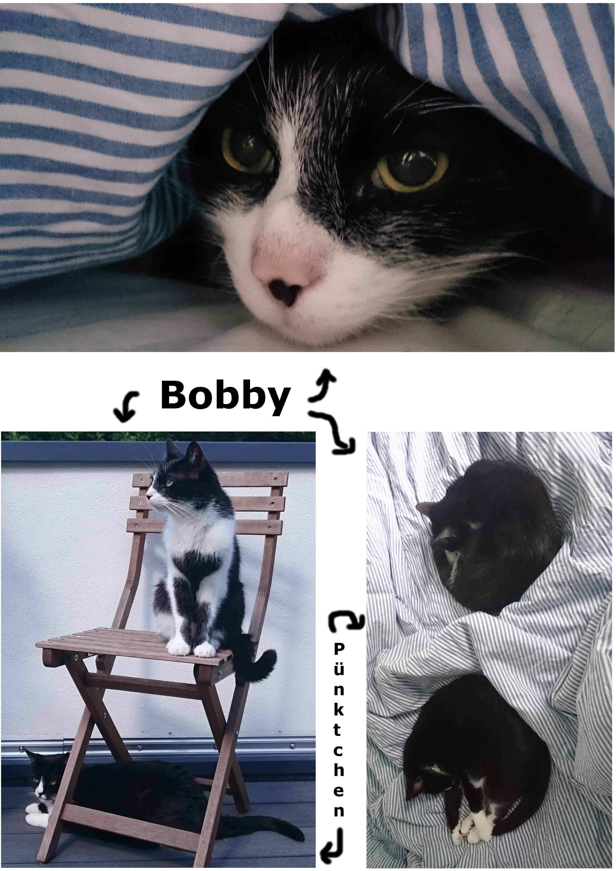 Bobby.jpg